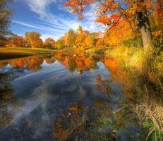Фото бесплатно Россия, пейзаж, осень цветы