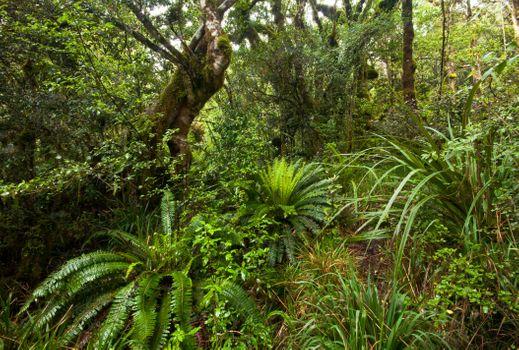 Фото бесплатно тропики, джунгли, лес