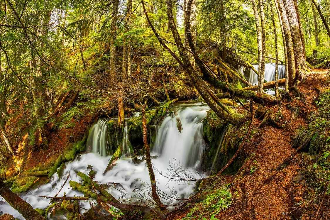 Фото бесплатно река, деревья, поток - на рабочий стол