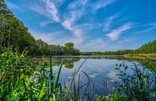 Фото бесплатно водоём, озеро, трава