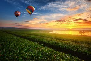 Фото бесплатно закат, поле, чайная плантация