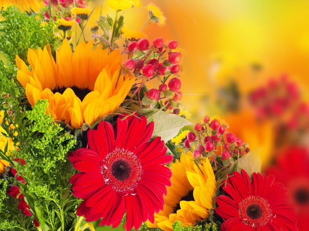 Фото бесплатно цветы, букет, флора, яркий букет, цветочная композиция, герберы, подсолнух, цветы