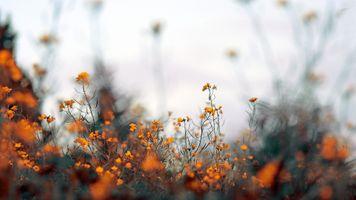 Фото бесплатно поле, глубина, цветы