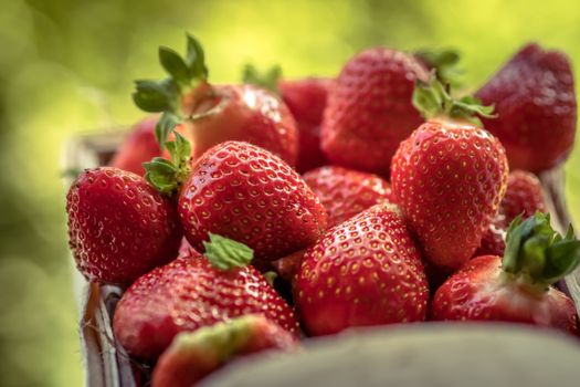 Strawberry in a box · free photo