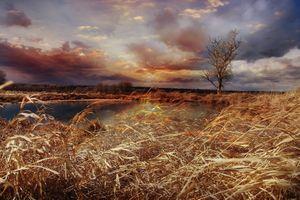 Фото бесплатно осень, луг, деревья, водоём, ветер