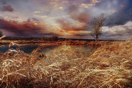 Фото бесплатно осень, луг, деревья