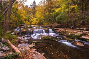 Фото бесплатно осенние цветы, деревья, водопад