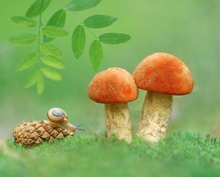 Бесплатные фото подосиновик,шишка,улитка,гриб,макро