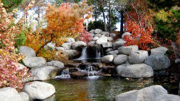 Фото бесплатно листья, путешествия, окружающая среда