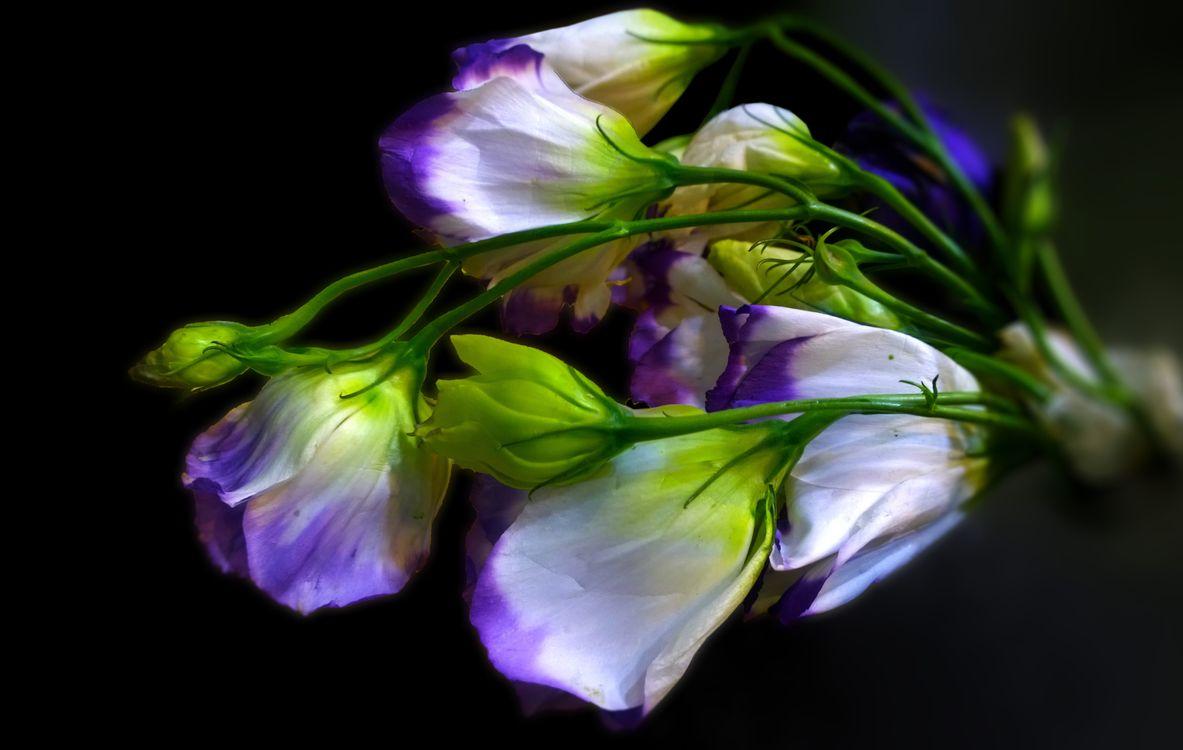 Фото бесплатно ирис, букет, цветы, цветок, природа, белый, цветы - скачать на рабочий стол
