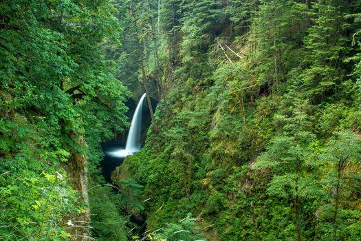 Фото бесплатно скалы, лес, ущелье реки Колумбия