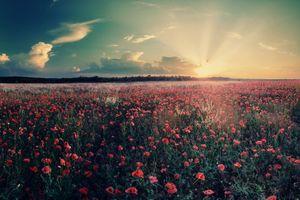 Фото бесплатно поле, цветочная долина, цветы