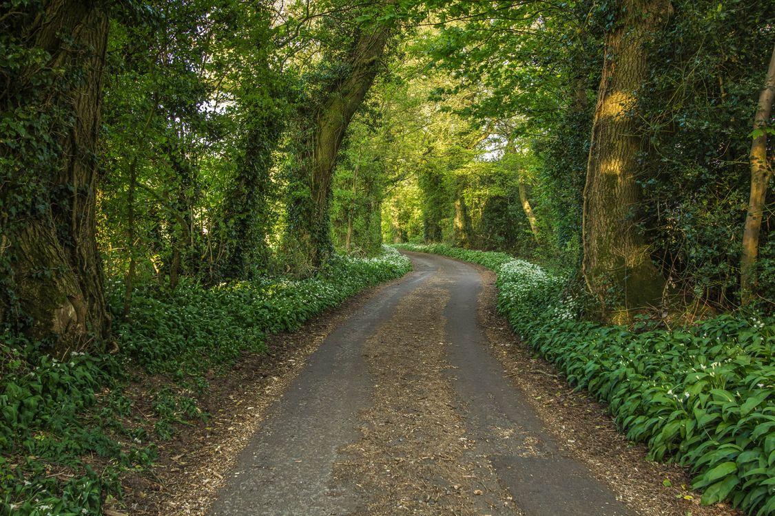 Обои лес, деревья, дорога картинки на телефон