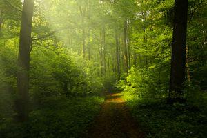 Бесплатные фото лес,деревья,дорога,солнечные лучи,природа,пейзаж
