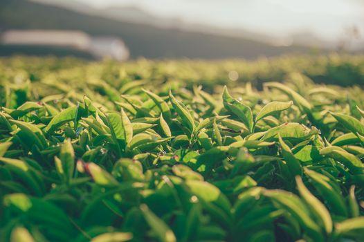 Фото бесплатно зеленый, трава, дерево