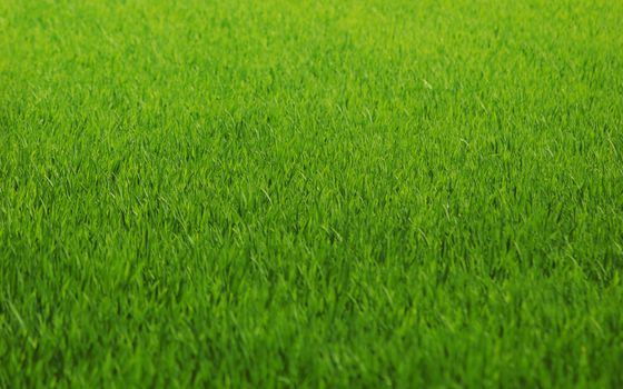 Photo free abstract, grass, green