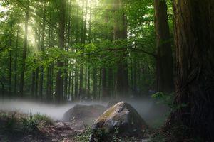 Заставки лес, туман, лучи солнца