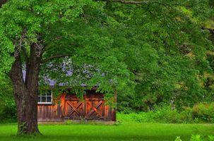 Фото бесплатно дом, пейзаж, луг, деревья, дом за деревом
