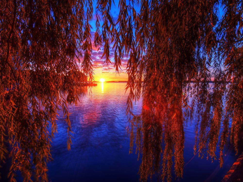 Фото бесплатно озеро, Онтарио, Торонто, закат, небо, ветки деревьев, листья, природа, пейзаж, пейзажи