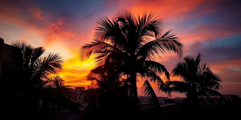 Фото бесплатно пальмы, силуэт, легкий - на рабочий стол