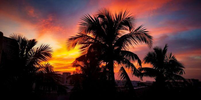 Бесплатные фото пальмы,силуэт,легкий,облако,небо,солнце,восход,закат солнца,солнечный лучик,утро,рассвет,атмосфера
