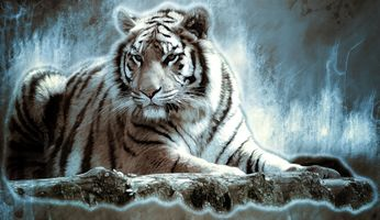 Бесплатные фото тигр,кошка,хищник,животные,опасный,природа,млекопитающее