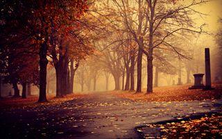 Фото бесплатно осень, парк, тропа