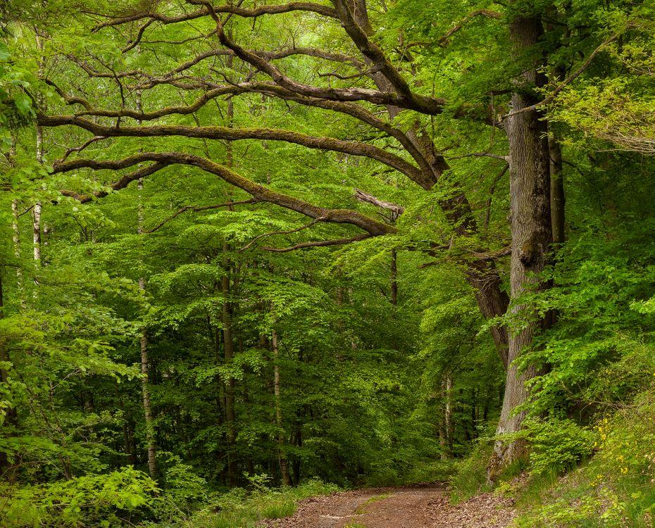 Зеленый лес и тропа · бесплатное фото