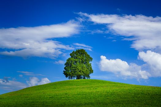 Photo free Lone Tree, hill, grass