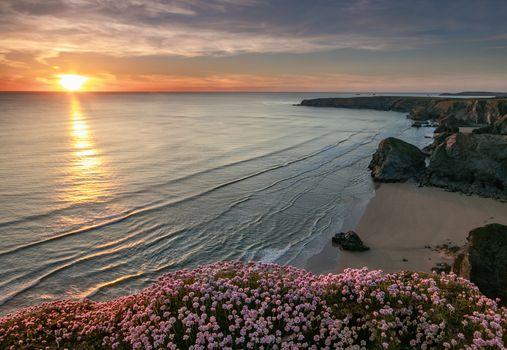 Цветы на морском берегу · бесплатное фото