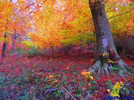 Бесплатные фото осень,лес,деревья,парк,природа,пейзаж,краски осени