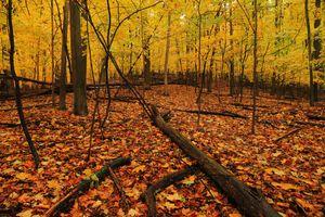 Фото бесплатно осенние листья, осень, природа