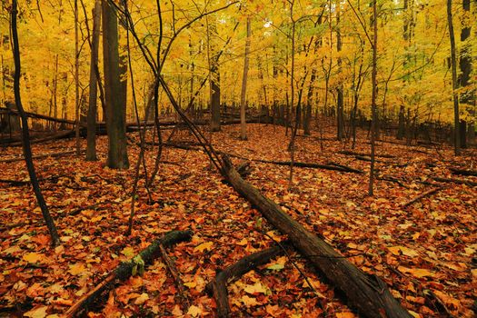 Photo free autumn leaves, autumn, nature