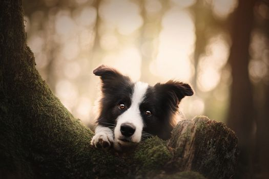 Черно-белая собака возле дерева