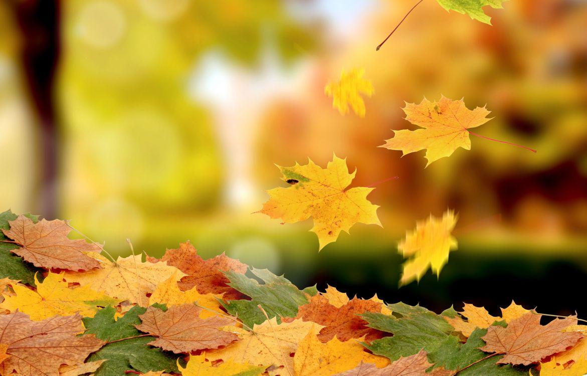 Обои времена года, природа, листья картинки на телефон