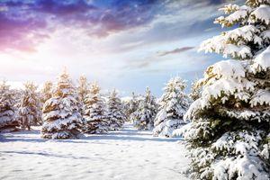 Фото бесплатно зима, снег, деревья, ёлки, небо, природа, пейзаж