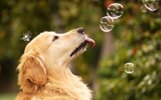 Photo free soap bubbles, dog, bubbles