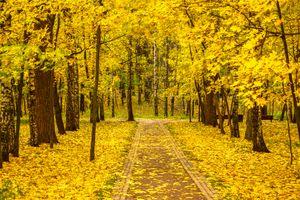 Бесплатные фото Октябрь в Царицыно,осень,Царицыно музей-заповедник,парк,усадьба,Москва,Россия