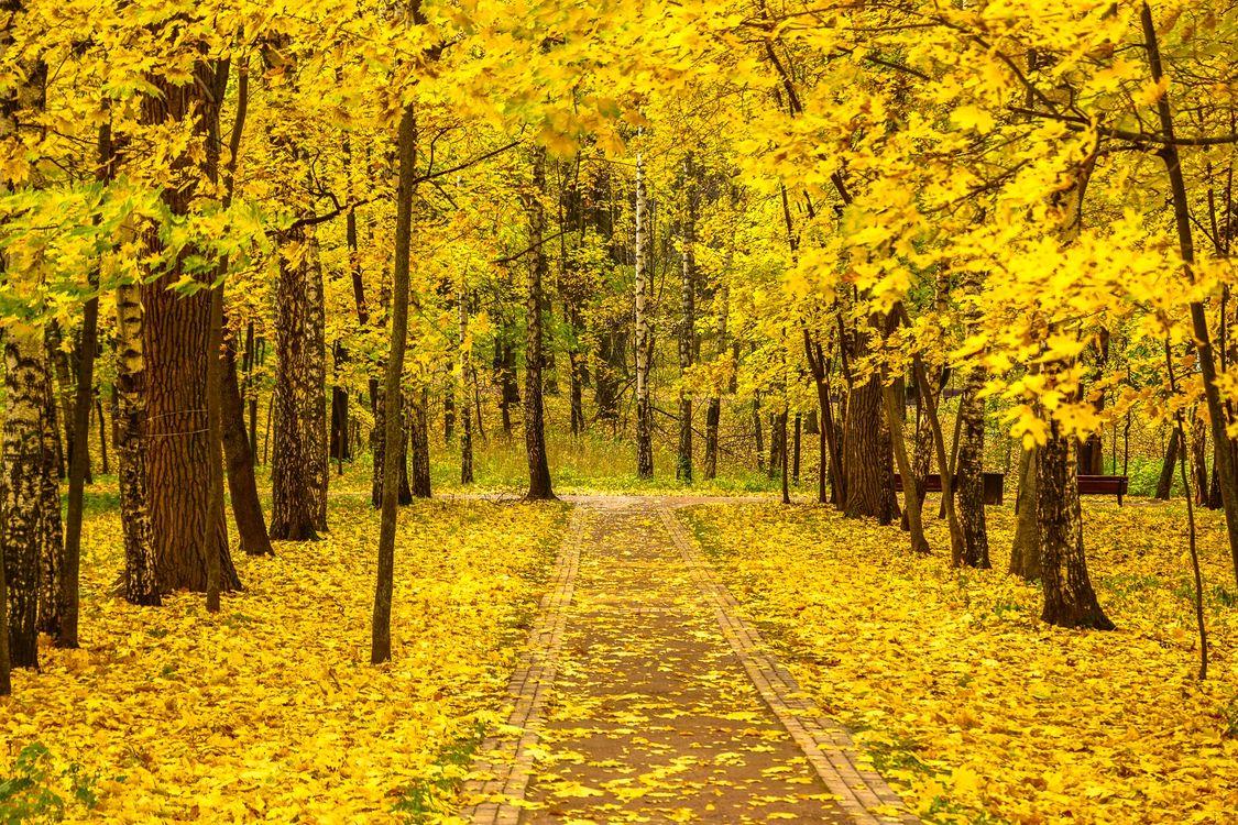 Фото бесплатно осенние краски, осенние листья, октябрь в лето - на рабочий стол