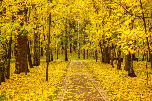 Фото бесплатно осенние краски, осенние листья, октябрь в лето