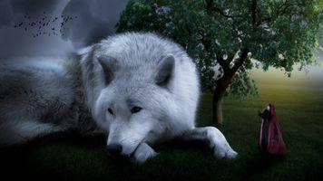 Бесплатные фото поле, белый волк девушка, дерево, тучи, фантастика