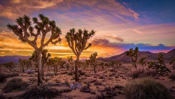 Бесплатные фото Sunset,Joshua Tree National Park,California,Закат,Национальный парк Джошуа-Три,Калифорния