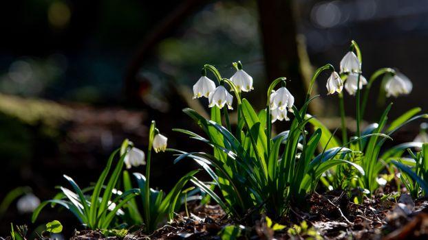 Фото бесплатно белые цветы, весна, цветение