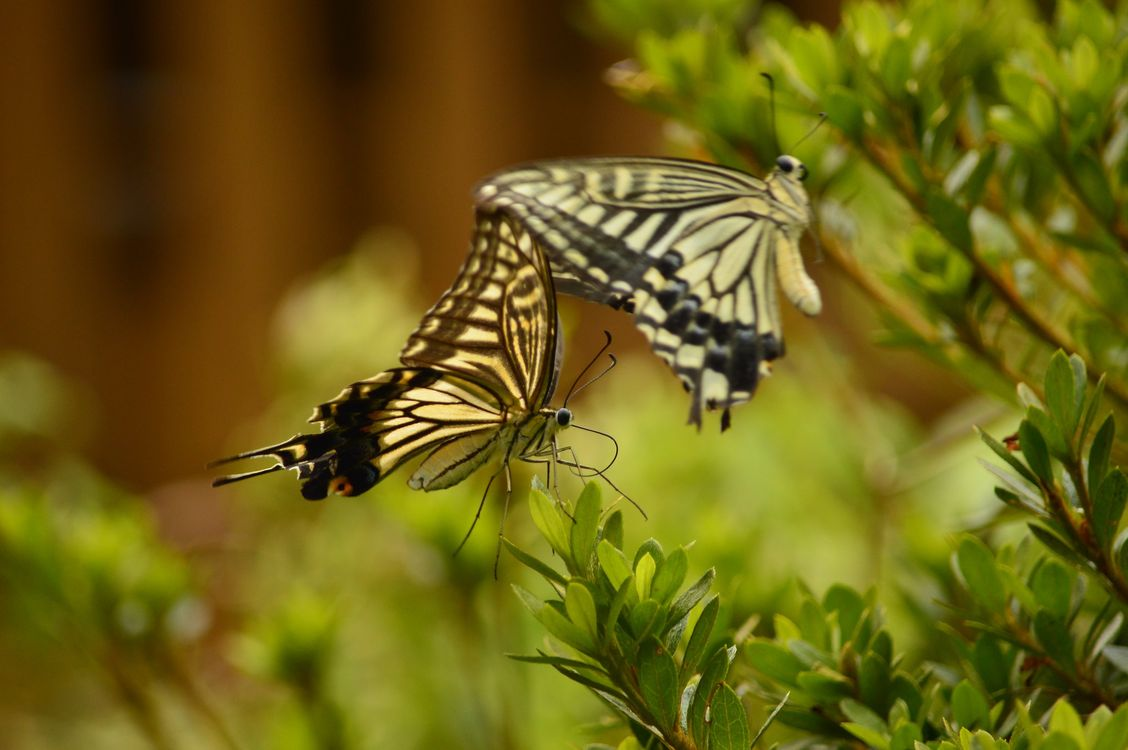 Photos for free butterfly, plant, branch - to the desktop
