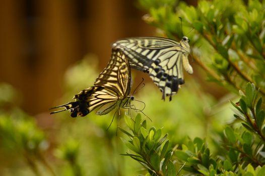 Фото бесплатно бабочки, растение, ветка