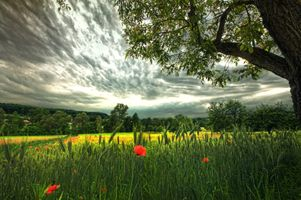 Фото бесплатно облака, цветы, трава