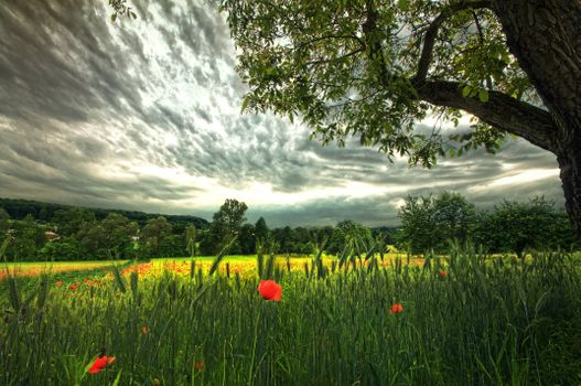 Photo free clouds, flowers, grass