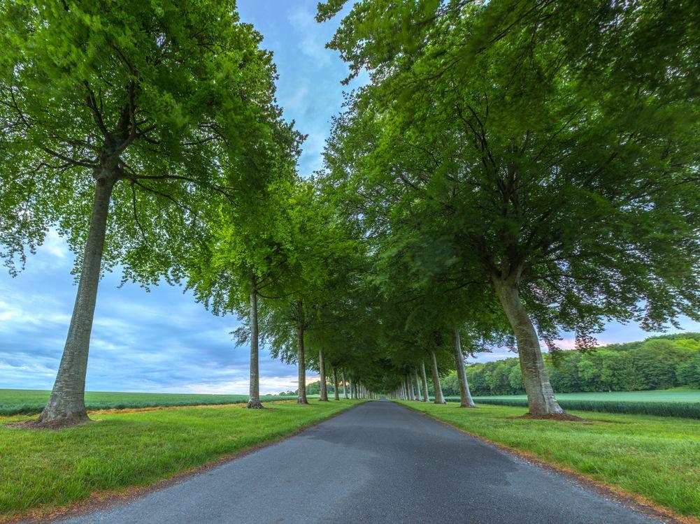 Дорога между зеленых деревьев · бесплатное фото