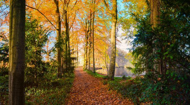 Photo free pond, autumn colors, Park