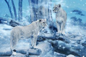 Бесплатные фото львица,львицы,животные,хищники,art
